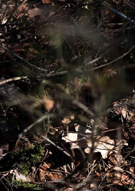 Afbeelding 1 Optisch Mijmeren