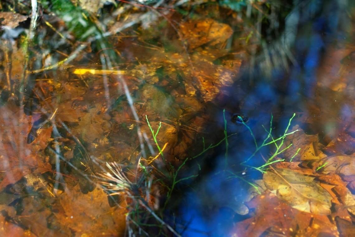 Afbeelding 2 Optisch Mijmeren